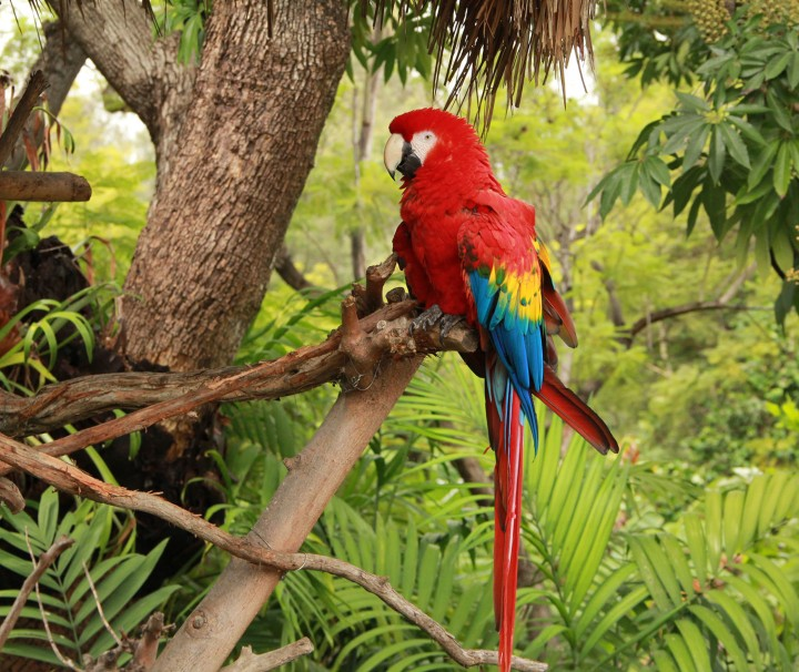 Tropical Rainforest Parrot